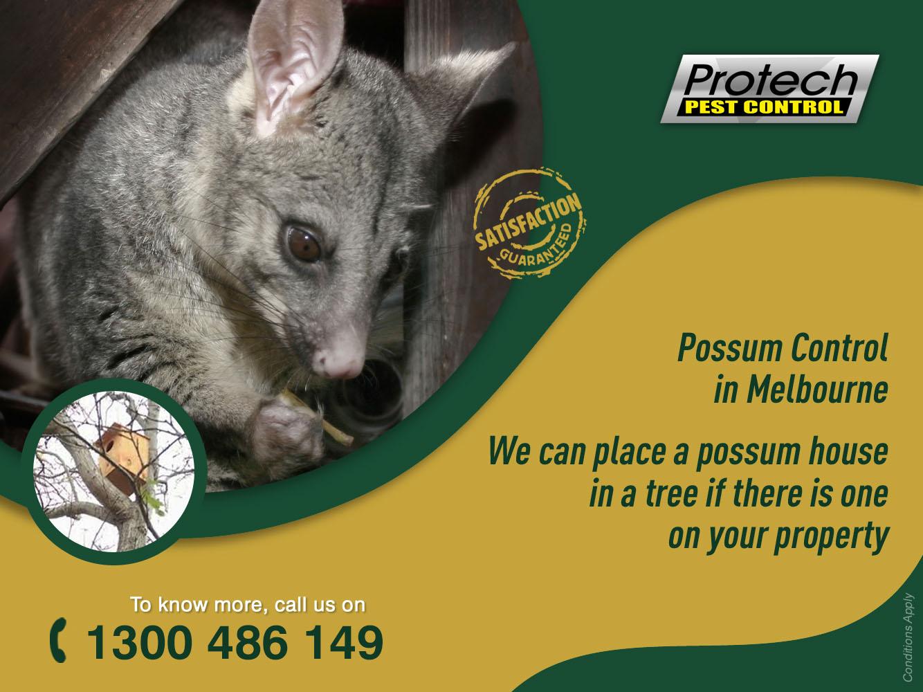 Possum control melbourne